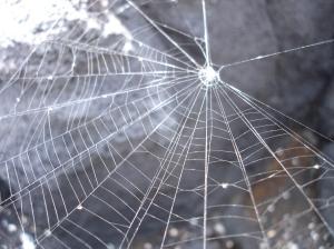 cobweb 1