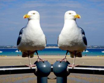 gull-talk