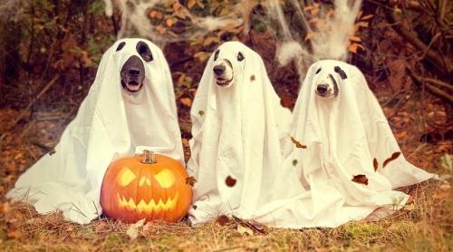 halloween organizing tips (1)