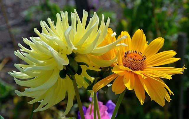 gerbera-gratitude-garden